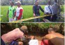 Penemuan Mayat Di Sawah Gegerkan Masyarakat Mandor