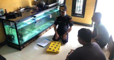 dalam Peraturan Menteri Kelautan dan Perikanan Nomor 19 Tahun 2020, KKP telah menetapkan kriteria ikan yang dilarang dibudidayakan dan diedarkan di Indonesia